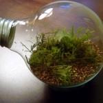 creativity - lightbulb garden