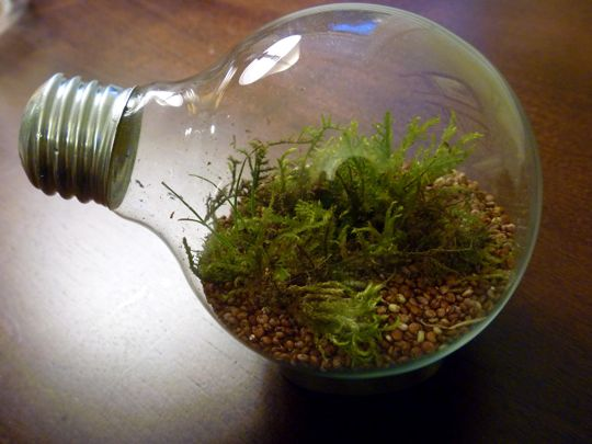 creativity - lightbulb garden