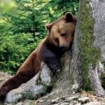 resting